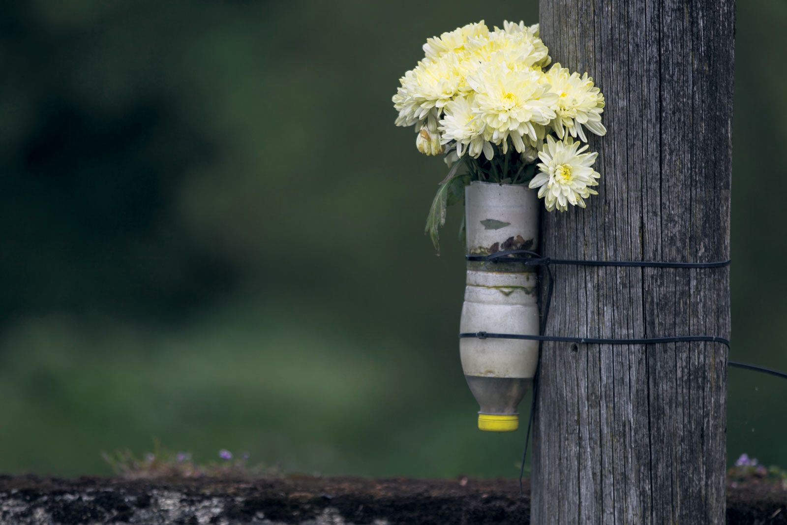 Flowers-on-ESB-Pole